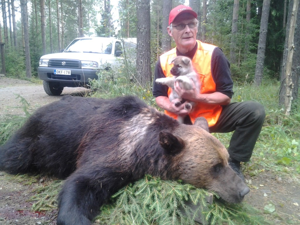 Pekka Kunnas ja kaadettu uroskarhu.