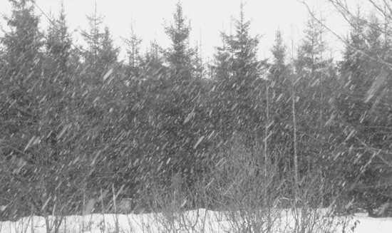 Lumen lentoa. Kuva: Alpo R.