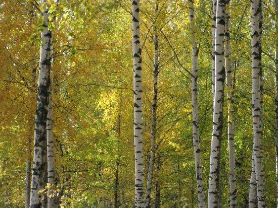 Metsä.
