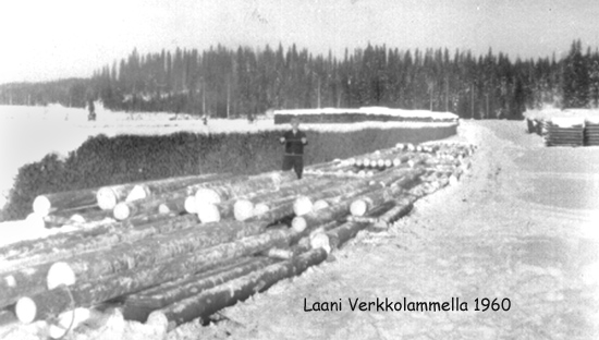 Kunnioitettava määrä puuta on ajettu Verkkolammen rantaan. Työnjohtaja Reino Kinnunen näyttää puun paksuutta. Näyttäisi olevan hartioiden levyinen latvasta
