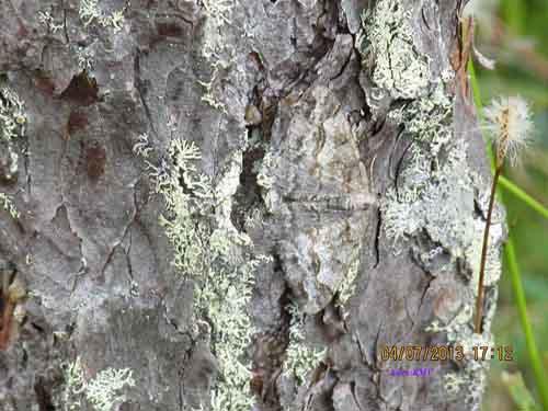 Tässä oikea mestarimaastoutujaperhonen. Mikähän laji lienee?