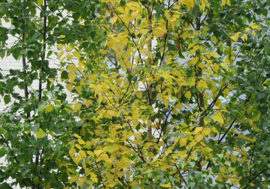 Kaksi vihreää ja yksi keltainen