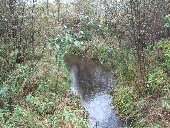 Virtaisipa tämä puro vielä Sääperiin - Onkilammen puro