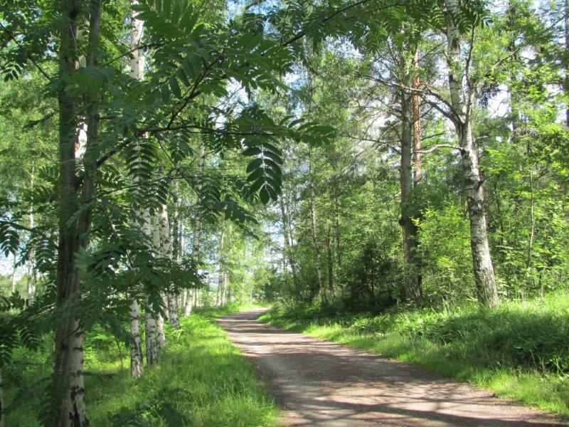 Kuva: Lissu Kaivolehto.