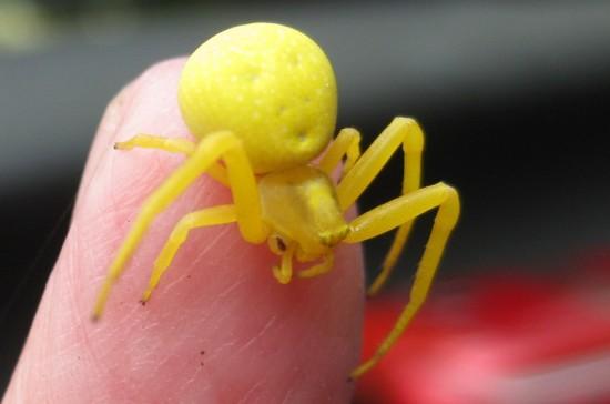 keltainenhamahakki