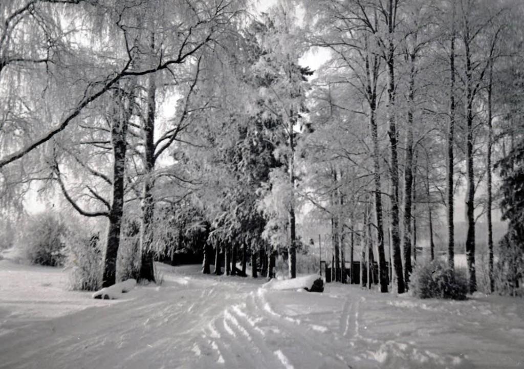 Värtsilän talvista maisemaa Niiralan Hovissa