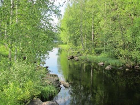 Kuva: Lissu Kaivolehto