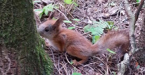 Oravan poika