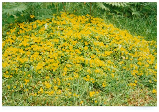 hilkan-puutarha02-copy